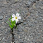 how to be resilient when your ADHD trips you up